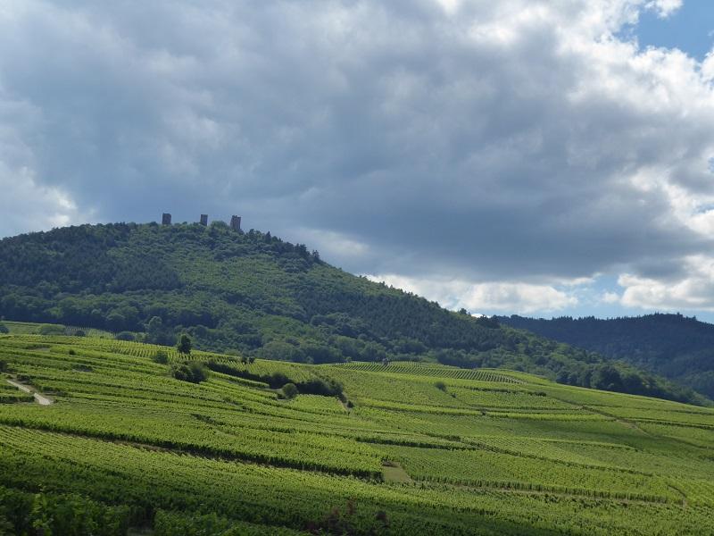 Alsace_vines