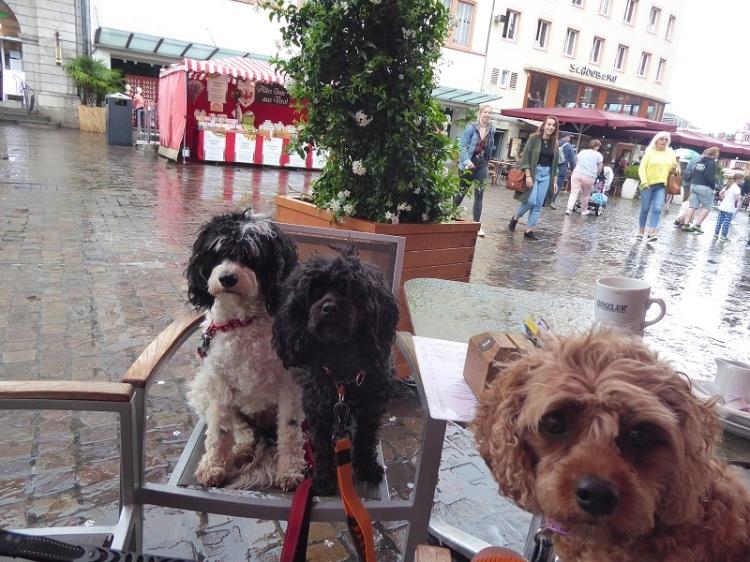 Cafe_Wurtzberg (2)