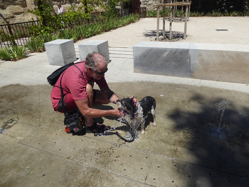 Dog_cooling_in_fountain