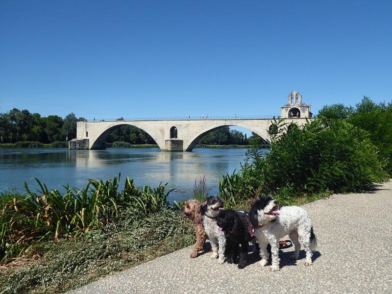 Pont_d'Avignon_dogs