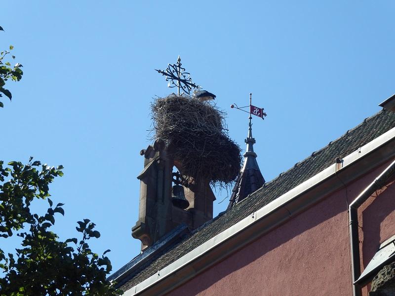 Stork_Chimney_Alsace