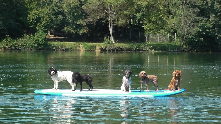 Five dogs on an SUP